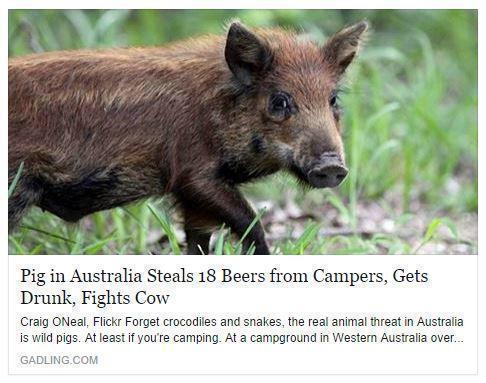 Best. Headline. Ever.
