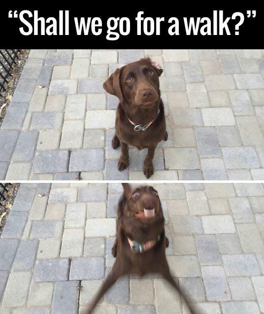 Shall We Go for a Walk